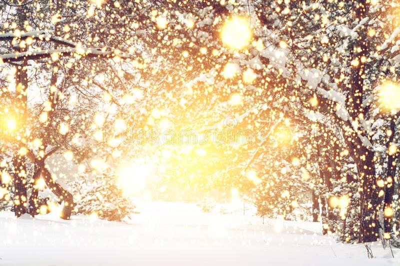 Christmas background. Magic glowing lights in snowy forest. Xmas time. Winter fairytale stock image