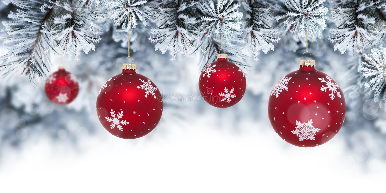 Christmas background with red baubles hanging on pine tree stock photography