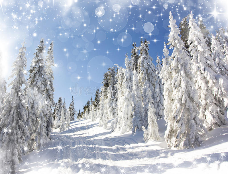 Download Christmas Background With Snowy Fir Trees Stock Photo - Image: 34729356