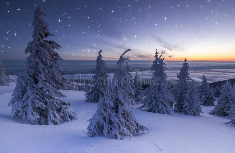 Christmas background of snowy winter landscape with snow or hoarfrost covered fir trees and copy space - winter magic holiday royalty free stock photo
