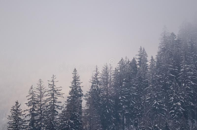 Christmas background of snowy winter landscape with snow or hoarfrost covered fir trees and copy space - winter magic holiday stock photography