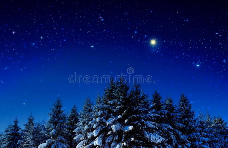 Christmas background with stars and trees in winter forest. Winter forest with snow covered fir trees and stars sky royalty free stock photos