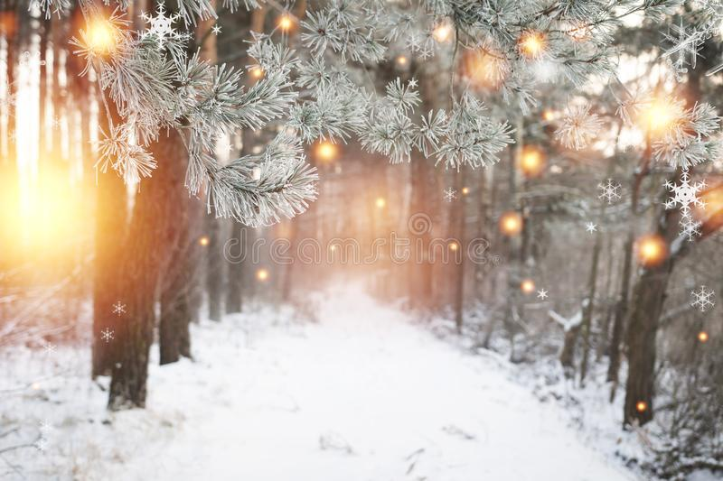 Christmas background. Winter forest with glowing snowflakes. Christmas forest with snowy road. Pine branches with hoarfrost stock photos