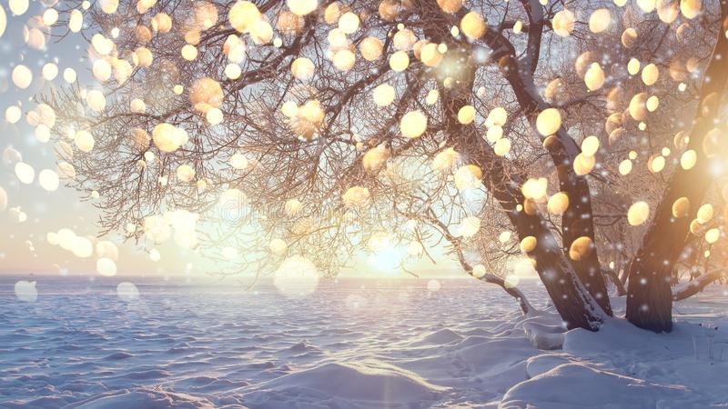Christmas background. Winter magic scene with illuminated snowflakes in snowy park. Scenery winter landscape. Bright sunlight in frosty park royalty free stock photos