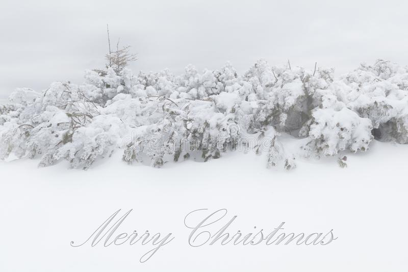 Christmas background with winter mountain covered in snow. Heavy snow fall on pine trees stock photo