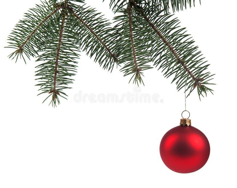 Download Christmas ball stock image. Image of needles, branch - 11597785