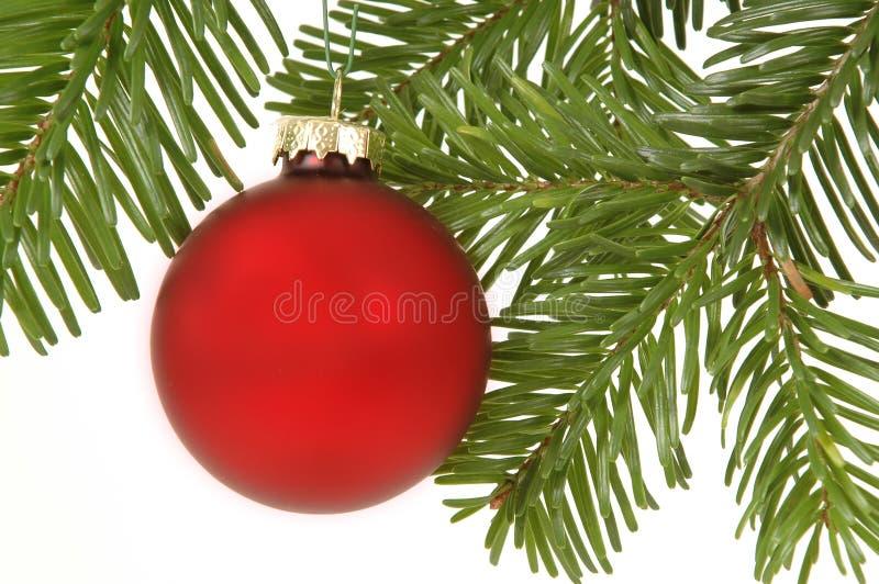 Christmas ball. Hanging in christmas tree royalty free stock photos