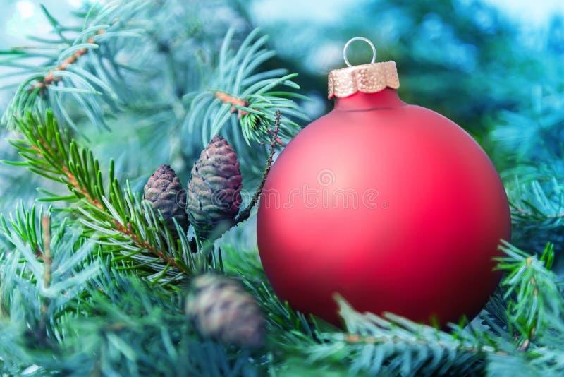 Christmas ball from Christmas tree. Christmas ball and green christmas tree royalty free stock image