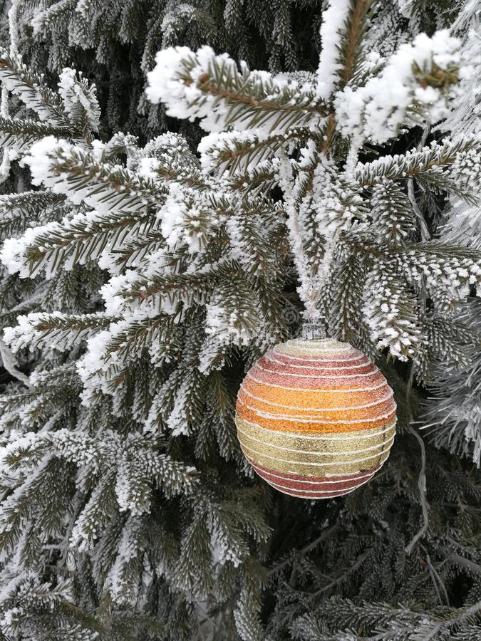 Christmas ball on a fir branch under a snow cap in the forest, hoarfrost on pine branches, frost and winter landscape for the stock photos