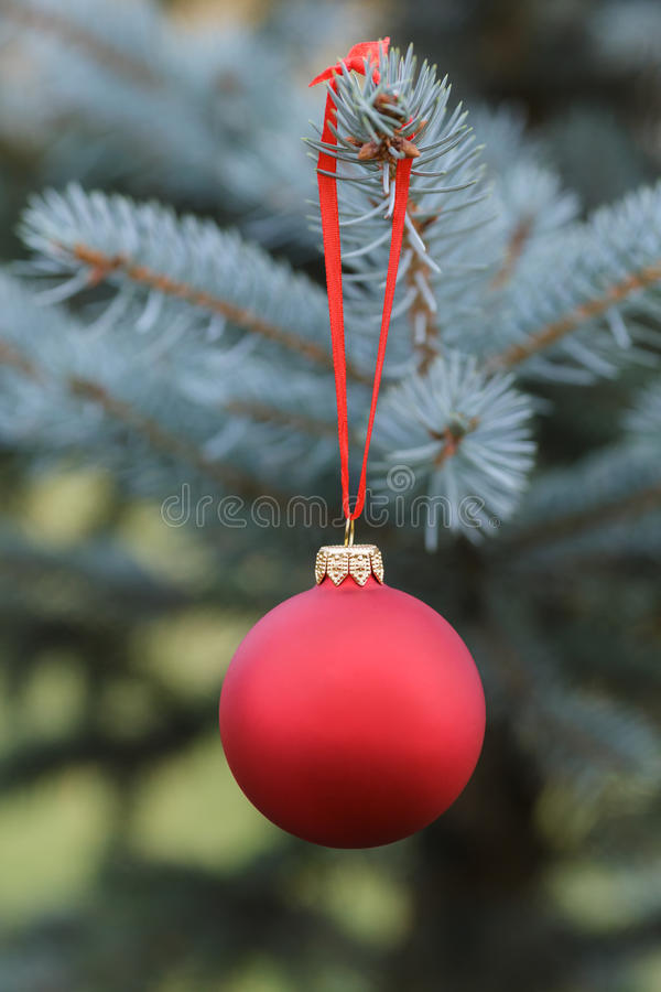 Christmas ball hanging on blue spruce stock images