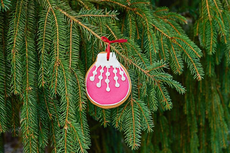 Christmas ball spiced gingerbread cookie with sugar icing hanging on fir branch royalty free stock photos