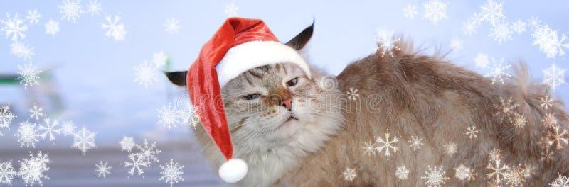 Christmas banner, cat santa. Winter royalty free stock photography