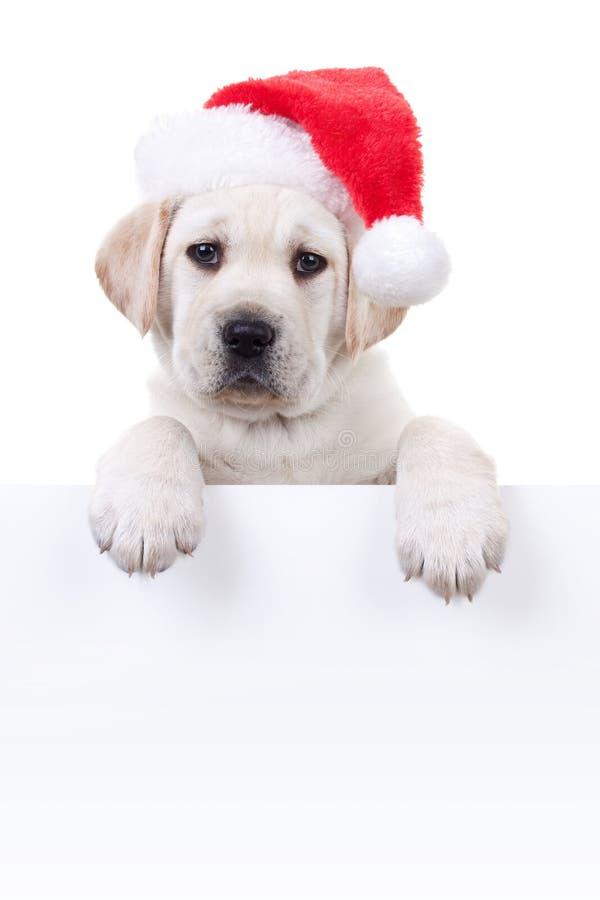 Christmas Banner Dog stock photo
