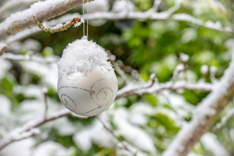 Christmas bauble covered with snow, hanging from a branch of a tree. In a garden royalty free stock images
