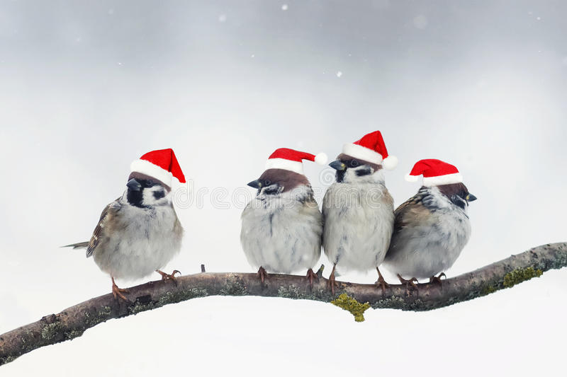 Christmas birds with little red hats during a snowfall. Funny Christmas birds with little red hats during a snowfall stock photo