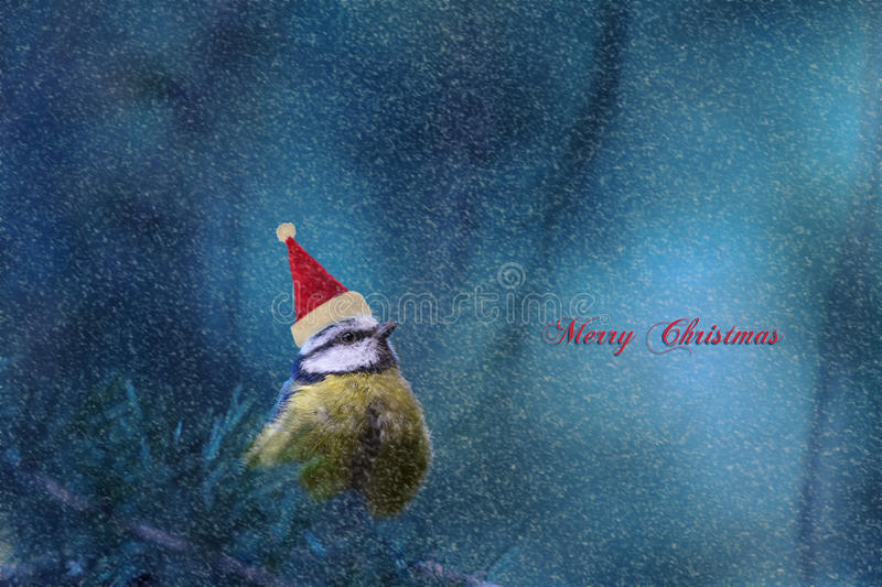 Download Christmas stock image. Image of perching, holiday, concept - 33089849