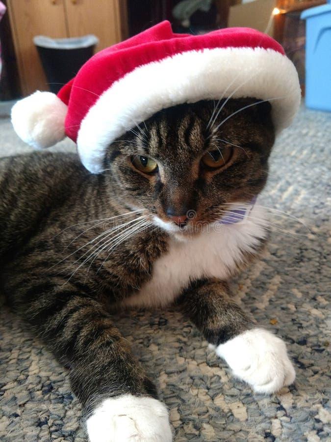 Christmas `Bobby Socks`. Martinsville, Ind. Christmas 2018. Gmas Kitty getting in the spirit. `Bobby Socks royalty free stock photo