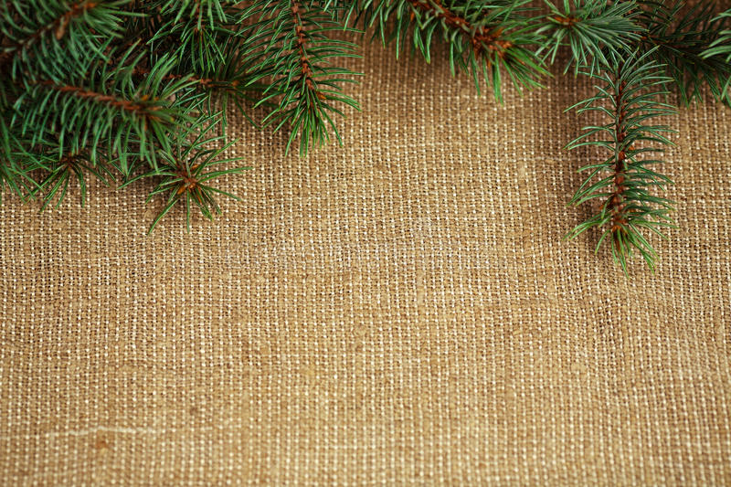 Christmas border from branch. Christmas border from natural branch of fir tree on burlap background stock photo