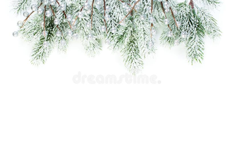 Christmas border composition. Winter evergreen fir branches and silver berries isolated on white background stock photos