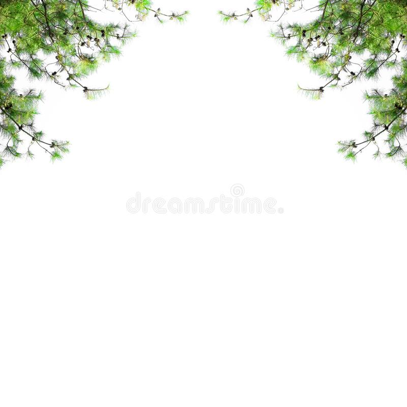 Christmas border with fir branches isolated on white background. Pine tree frame with blank space royalty free stock image