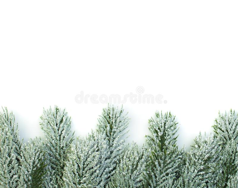 Christmas border of green fir branch on white background.  stock photography