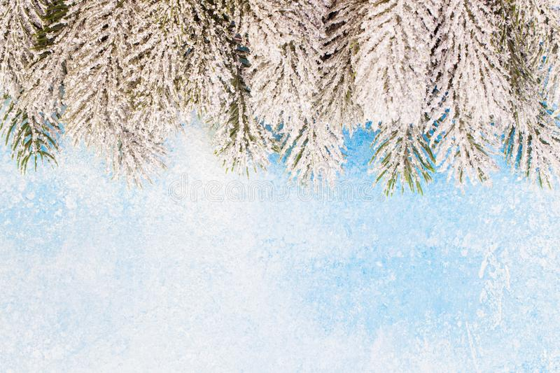 Christmas border. Green snowy fir branches on blue frozen texture background with copy space.  royalty free stock image