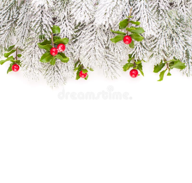 Christmas border with green Xmas tree twig and holly berries and leaves.  stock images