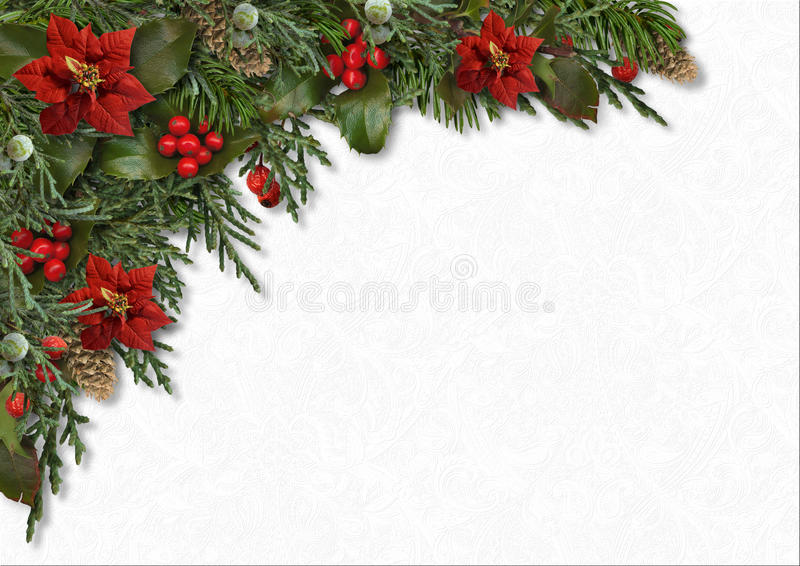 Christmas border of holly,poinsettia, mistletoe, fir tree,cones. Gorgeous Christmas border of mistletoe, poinsettia, holly and fir branches on a white textural royalty free stock photos