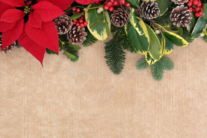 Christmas Border. Christmas and winter flora background border with red poinsettia flower, holly, mistletoe and spruce fir over brown paper royalty free stock image