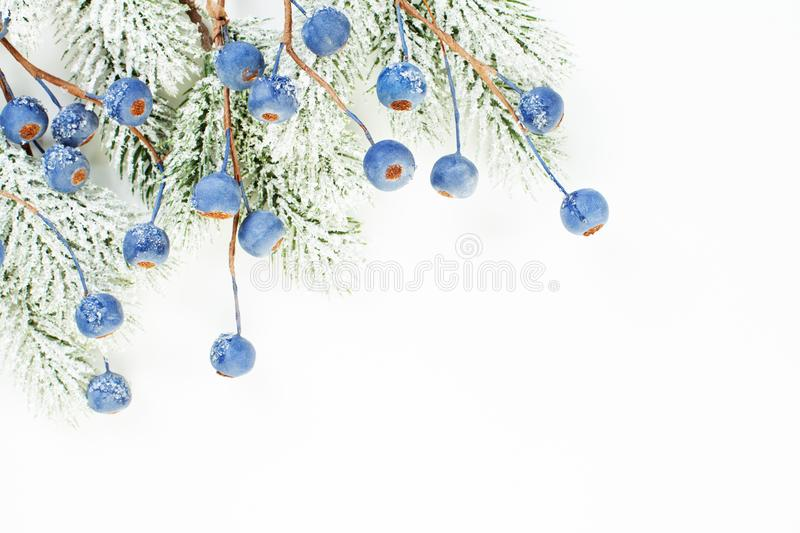 Christmas border of Xmas tree branch and blue berries isolated on white background.  royalty free stock photo