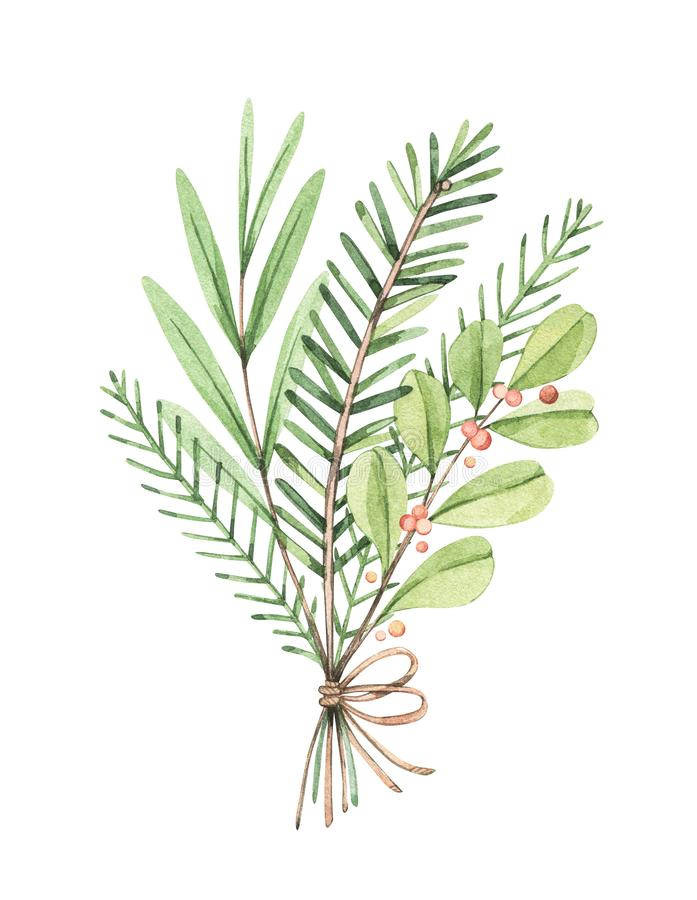 Christmas bouquet with eucalyptus, fir branch and holly - Watercolor illustration. Happy new year. Winter greenery composition. Pe vector illustration