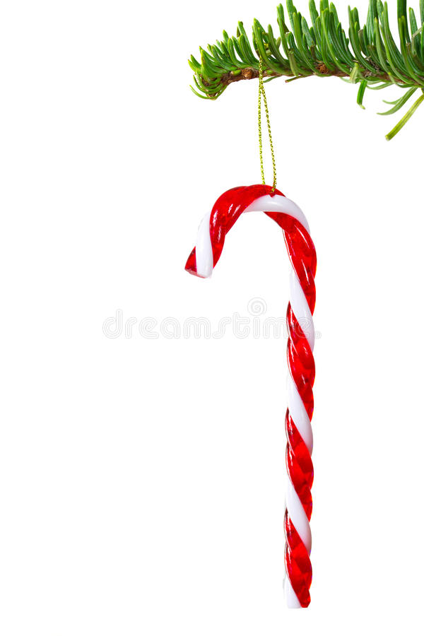 Christmas candy cane. Traditional christmas candy cane on the tree - isolated on white royalty free stock images