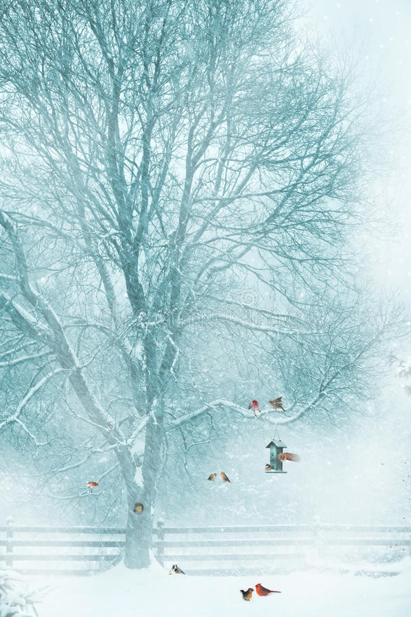 Download Christmas card background. stock image. Image of nature - 28109671