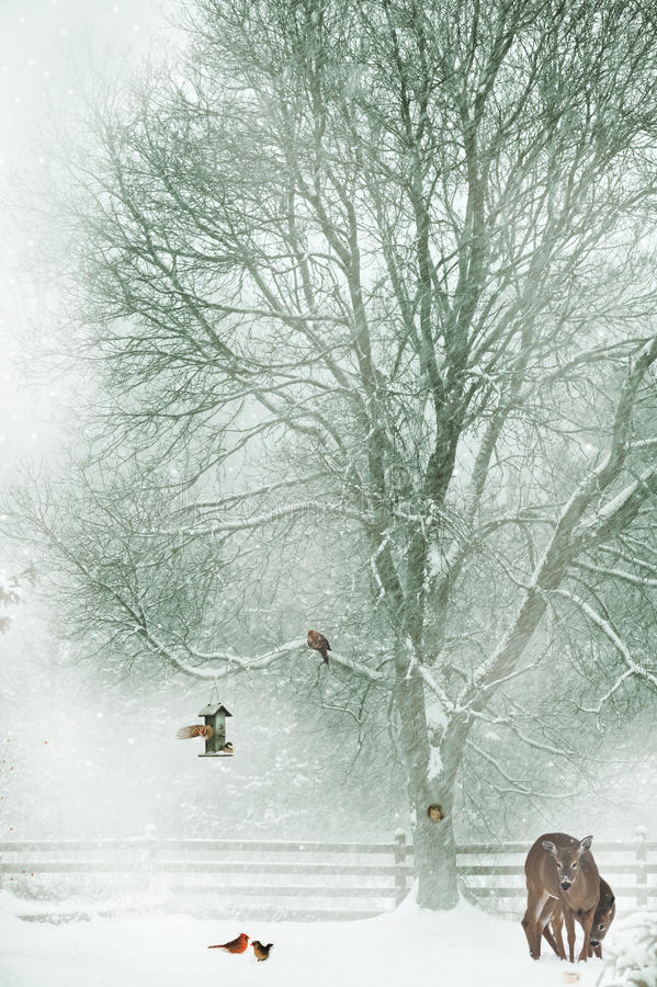 Download Christmas Card Background. Stock Photos - Image: 28109993
