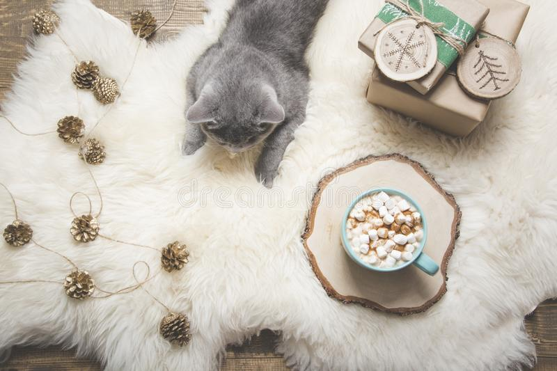 Christmas card. Cup of coffee, british cat, handmade gifts. Rest at home. Top view. Copy space. Matte image. Christmas holiday card. Cup of coffee, british cat stock photo