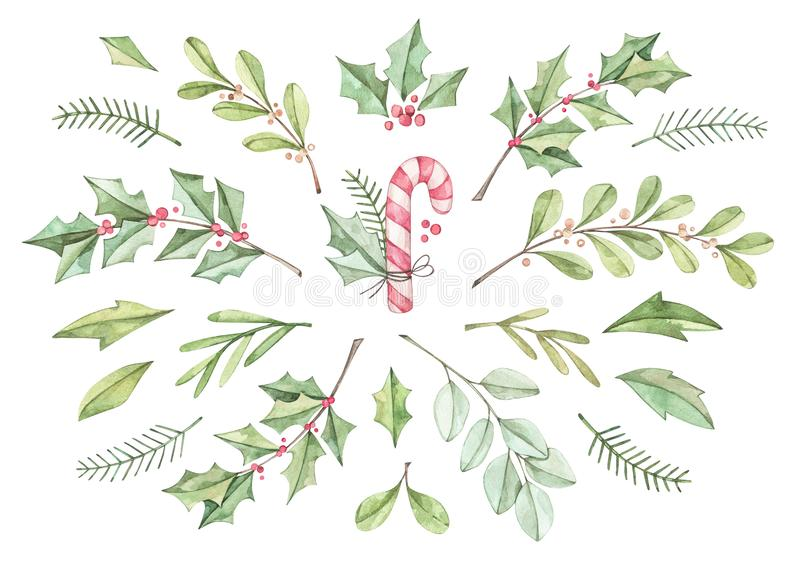 Christmas card with eucalyptus, fir branch, candy  and holly - Watercolor illustration. Happy new year. Winter greenery design ele. Ments. Perfect for cards royalty free illustration