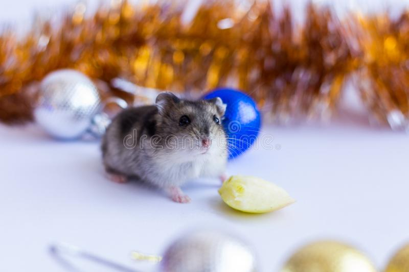 Christmas card 2020. New Year calendar 2020, New Year 2020 - year of the rat. Year of the Rat 2020, Christmas rat on the background of New Year`s blue decoration stock photo