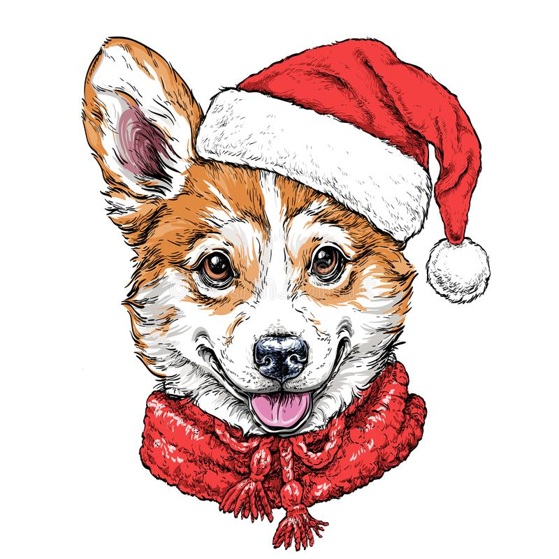 Christmas card with Puppy Pembroke Welsh corgi portrait in red Santa`s hat and scarf. Vector illustration royalty free illustration