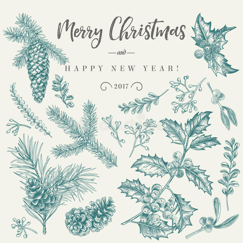 Christmas card with traditional plants. royalty free illustration