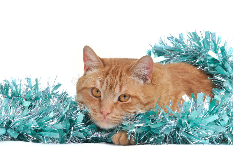 Christmas Cat. Cat with Christmas Tinsel Decoration royalty free stock images