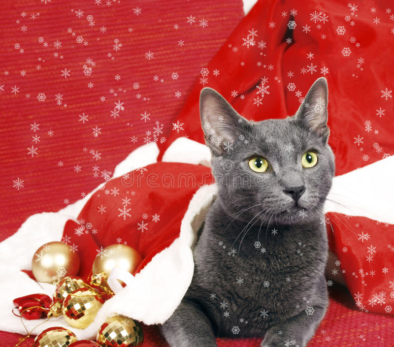 Christmas cat. Adorable christmas cat and snowflakes stock photos