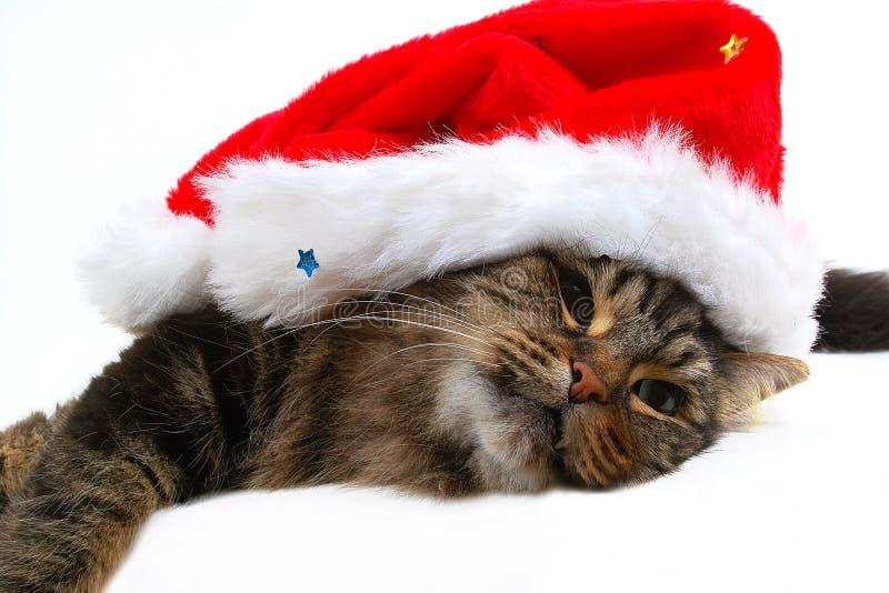 Christmas cat 2. Christmas cat close-up royalty free stock image