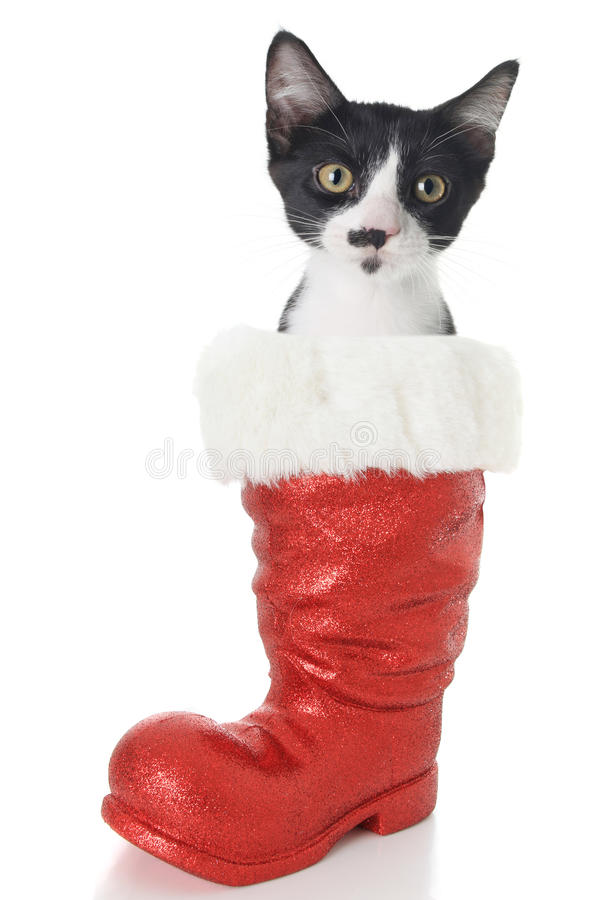 Christmas cat. Black and white Christmas cat in Santa's boot stock images