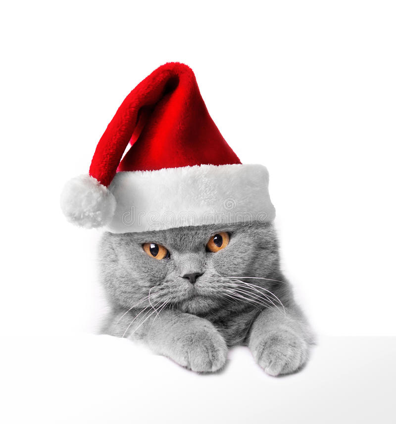 Free Christmas Cat Royalty Free Stock Photo - 21897665