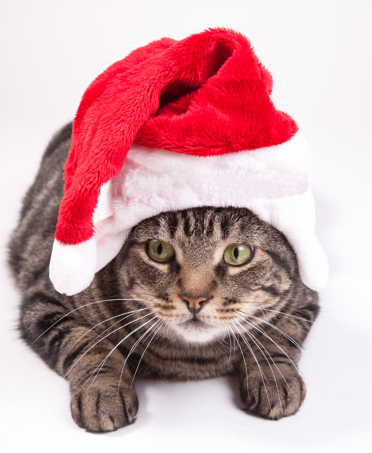 Christmas cat. A tubby cat laying down with a red Christmas hat royalty free stock photos