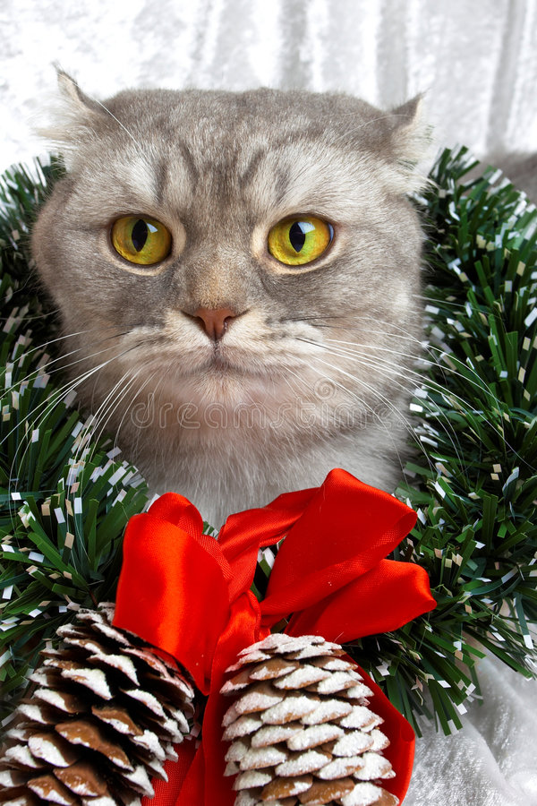 Christmas cat. Among a fur-tree,christmas balls and a tinsel royalty free stock image