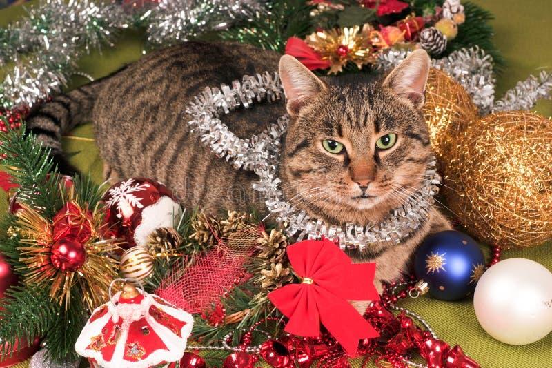 Christmas cat. Beautiful Christmas cat and decoration stock image