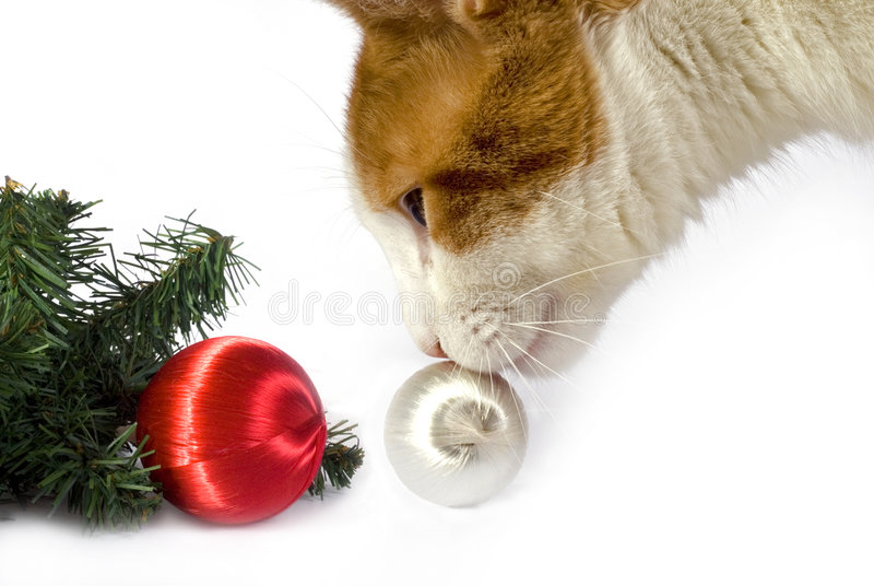 Download Christmas Cat stock photo. Image of feline, decorations - 7346764