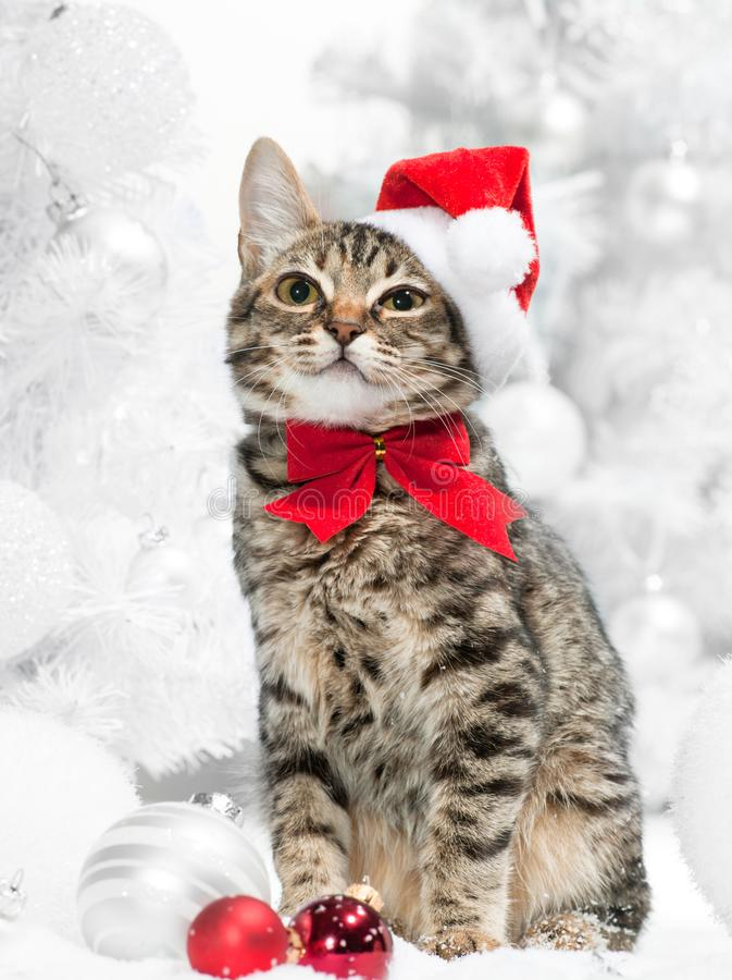 Christmas cat. At red santa`s hat near christmas tree stock images