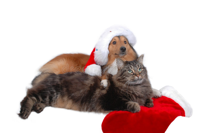 Christmas cat and dog. Close-up on white background stock photos